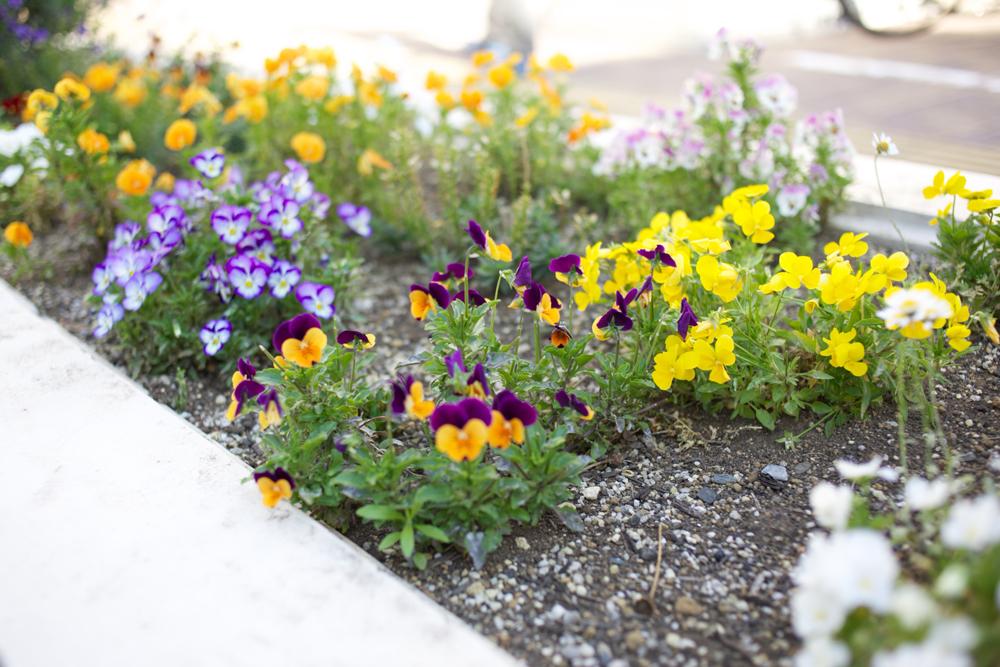 柳町ケアプラザ、花壇に育つ花の写真