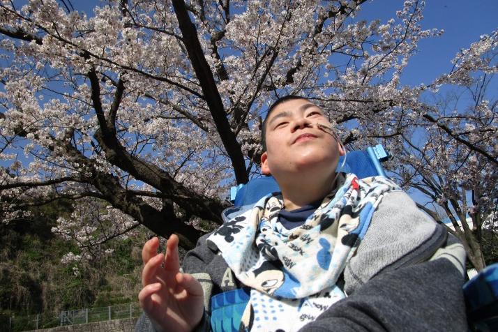 満開の桜の道を散歩する利用者さんの様子